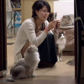 Paying for Petting Time in Japan's Cat Cafes, Time.com