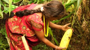 Januka picks vegetables on her farm during the rainy season.